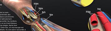 Graphiste 3D Freelance Médical, Technique et Scientifique
