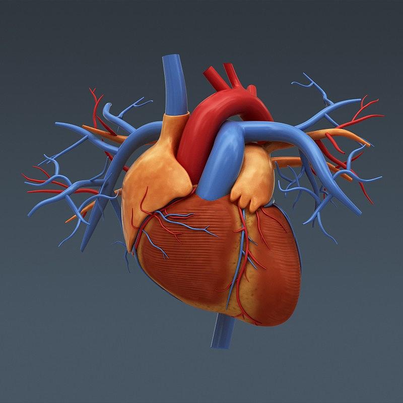 Illustration du Coeur en 3D