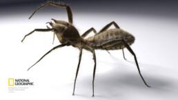 illustration 3d scorpion