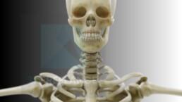 modélisation 3D squelette humain